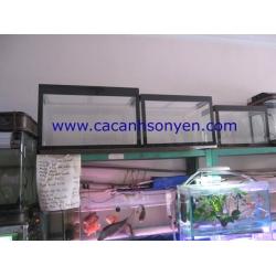 Bể kính Việt Nam