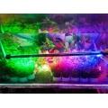 Đèn Led Caibao T4KG 30LED (3 màu)