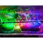 Đèn Led Caibao T4KG 50LED (3 màu)