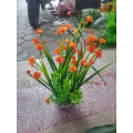 Bụi hoa số 3